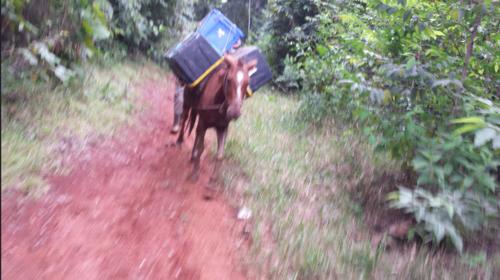 Belize horse 2015